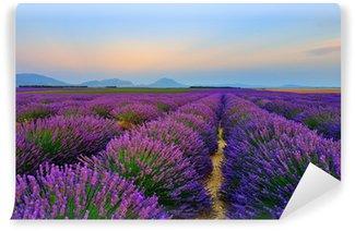Fototapet av Vinyl Lavendel fältet vid solnedgången