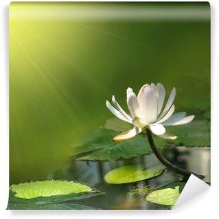 Fototapet av Vinyl Lilja blomma på en grön bakgrund