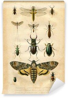 Fototapet av Vinyl Natural History: Insekter