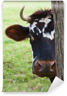 Fototapet av Vinyl Normandie Cow Ser fram bakom ett träd