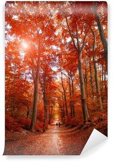 Fototapet av Vinyl Pathway under hösten park unde solljus