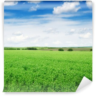 Fototapet av Vinyl Pea fält och blå himmel