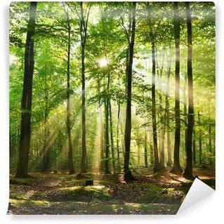 Fototapet av Vinyl Skog