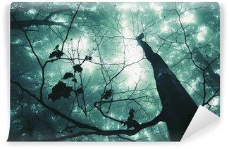 Fototapet av Vinyl Träd i en magisk skog med grön dimma