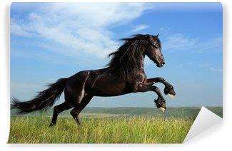 Fototapet av Vinyl Vacker svart häst spelar på fältet