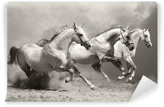 Fototapet av Vinyl Vita hästar i damm