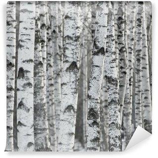 Fototapet av Vinyl Winter Birch Tree Forest Bakgrund