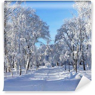 Fototapet av Vinyl Winter park, landskap