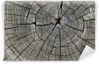 Fototapet av Vinyl Wood ring
