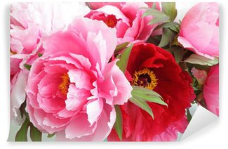 Vinylová Fototapeta 色 々 な 牡丹 の 花