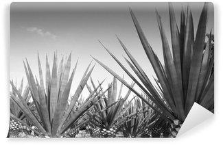 Vinylová Fototapeta Agave tequilana zařízení pro mexické tequily alkohol