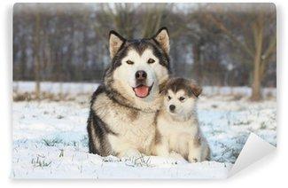 Fototapeta Winylowa Alaskan malamute i jej dziecko na śniegu