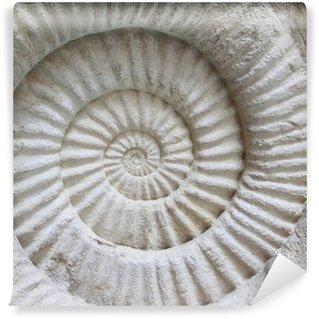 Vinylová Fototapeta Ammonite fosilní prehistorický na povrchu