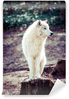 Fototapeta Winylowa Arctic White Wolf
