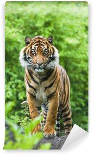 Vinylová Fototapeta Asian nebo bengálský tygr s bambusovými keři pozadí