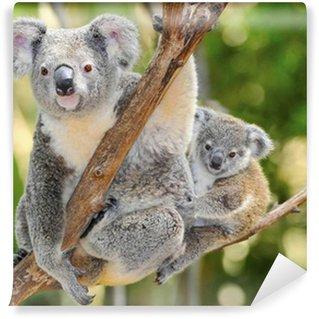 Vinylová Fototapeta Australian Koala Bear s dítětem, Sydney, Austrálie Gray Bear