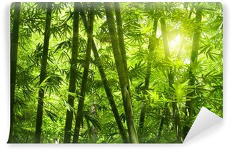 Vinylová Fototapeta Bambusový les