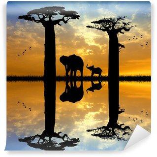 Vinylová Fototapeta Baobab a slon při západu slunce