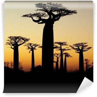 Vinylová Fototapeta Baobab při západu slunce silueta