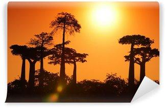 Vinylová Fototapeta Baobab