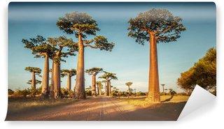 Vinylová Fototapeta Baobabs