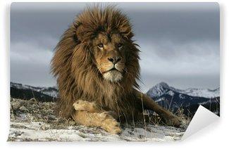 Vinylová Fototapeta Barbary lev, Panthera leo leo