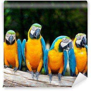 Vinylová Fototapeta Barevné čtyři papoušek sedí na stromě