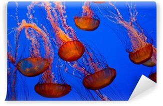 Vinylová Fototapeta Barevné medúzy