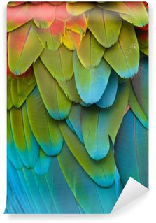 Vinylová Fototapeta Barevné papoušek peří