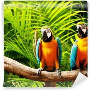 Vinylová Fototapeta Barevný papoušek pták sedí na bidélko