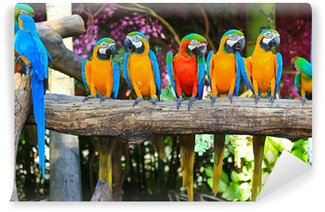 Vinylová Fototapeta Barevný papoušek