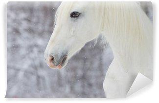 Fototapeta Vinylowa Biały piękny koń