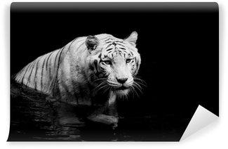 Fototapeta Winylowa Biały tygrys
