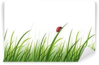 Fototapeta Winylowa Biedronka w trawie strona wektor tle