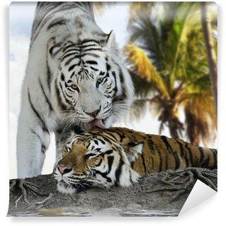 Vinylová Fototapeta Bílá a hnědá Tigers