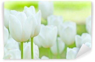 Vinylová Fototapeta Bílé tulipány