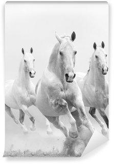 Vinylová Fototapeta Bílí koně v prachu