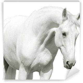 Vinylová Fototapeta Bílý kůň high key