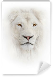 Vinylová Fototapeta Bílý lev na bílém pozadí
