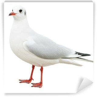 Vinylová Fototapeta Bílý pták racek izolované