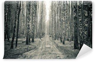 Vinylová Fototapeta Birch černá a bílá lesní
