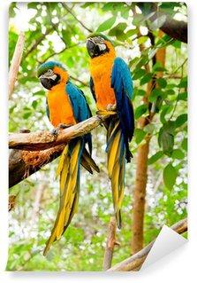 Vinylová Fototapeta Blue-a-žlutý papoušek - Ara ararauna ...