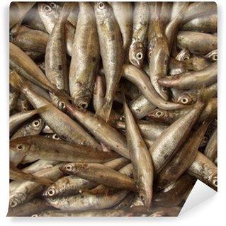 Fototapeta Winylowa Bogactwo ryb, grecki targ rybny.