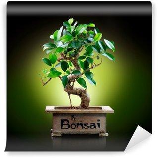 Vinylová Fototapeta Bonsai, izolovaných na černém pozadí
