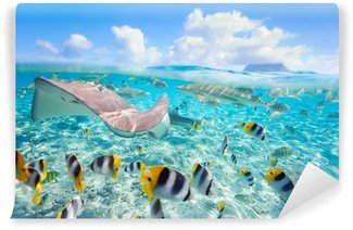 Vinylová Fototapeta Bora Bora pod vodou