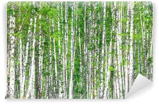 Vinylová Fototapeta Březový les. Květen