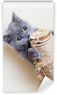 Vinylová Fototapeta Britská kočka poškrábání příspěvky