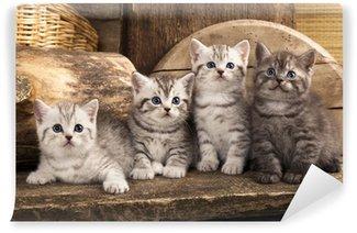 Vinylová Fototapeta Britské koťátko na retro pozadí
