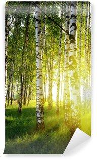 Vinylová Fototapeta Břízy v létě lese
