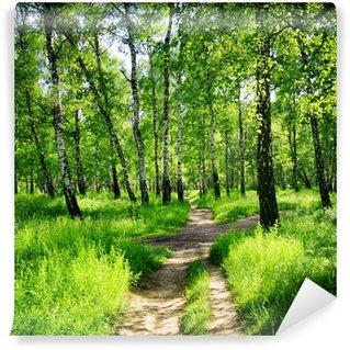 Fototapeta Vinylowa Brzozowy las w słoneczny dzień. Zielony las w lecie